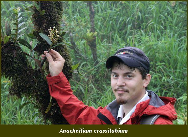 Anacheilium crassilabium