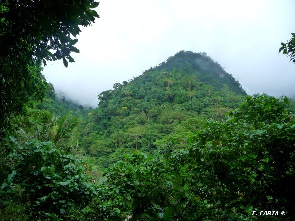 Forêt primaire, Mont Malesimbo, Mindoro, Philipines.