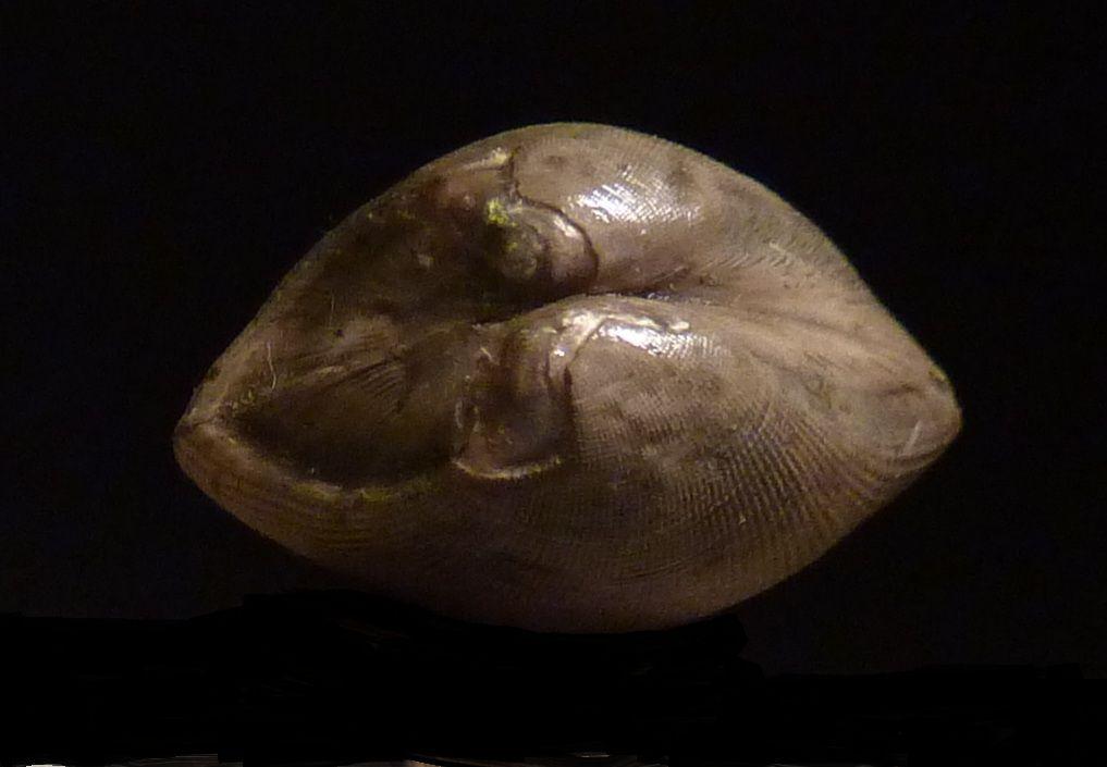 Fossiles de l'Albien par gisement, dans l'ordre alphabétique .