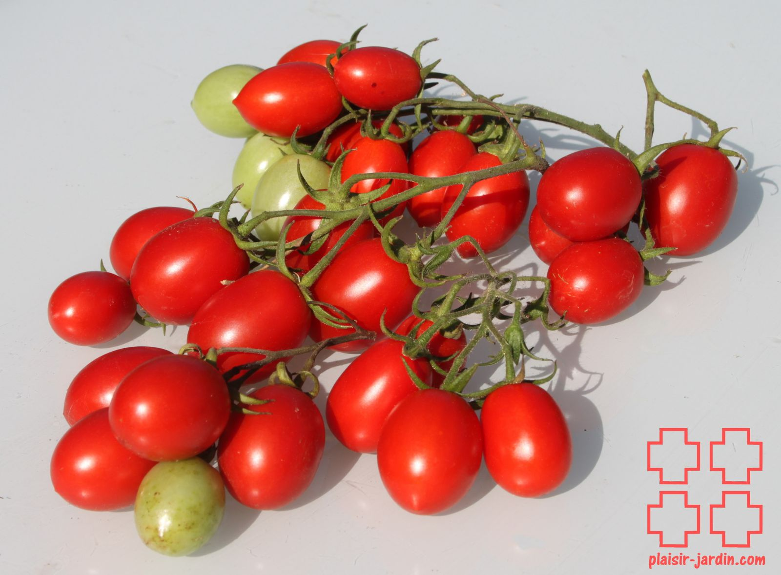 Redirecting to - Plant de tomate cerise ...