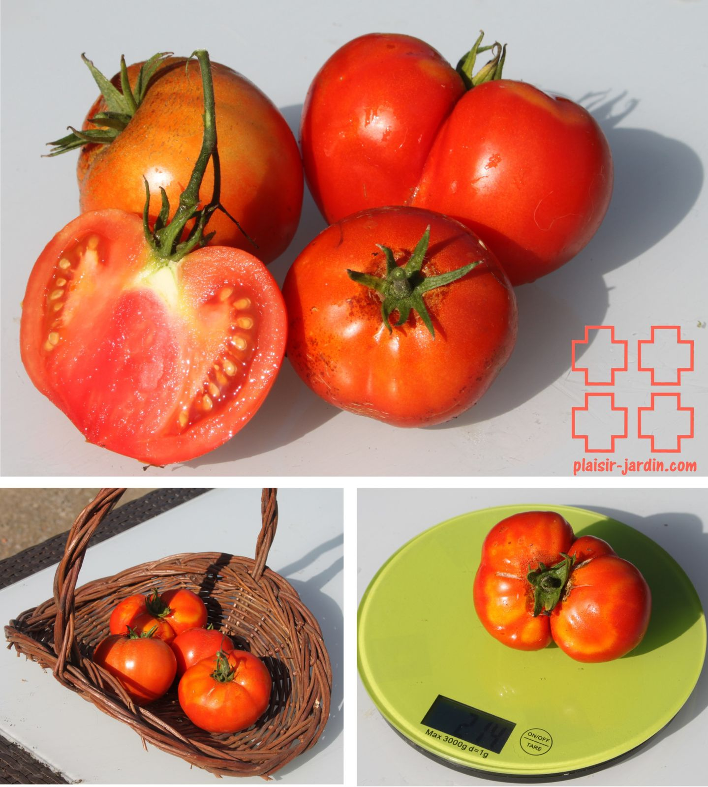 les tomates gros fruits test es en 2013 plaisir. Black Bedroom Furniture Sets. Home Design Ideas