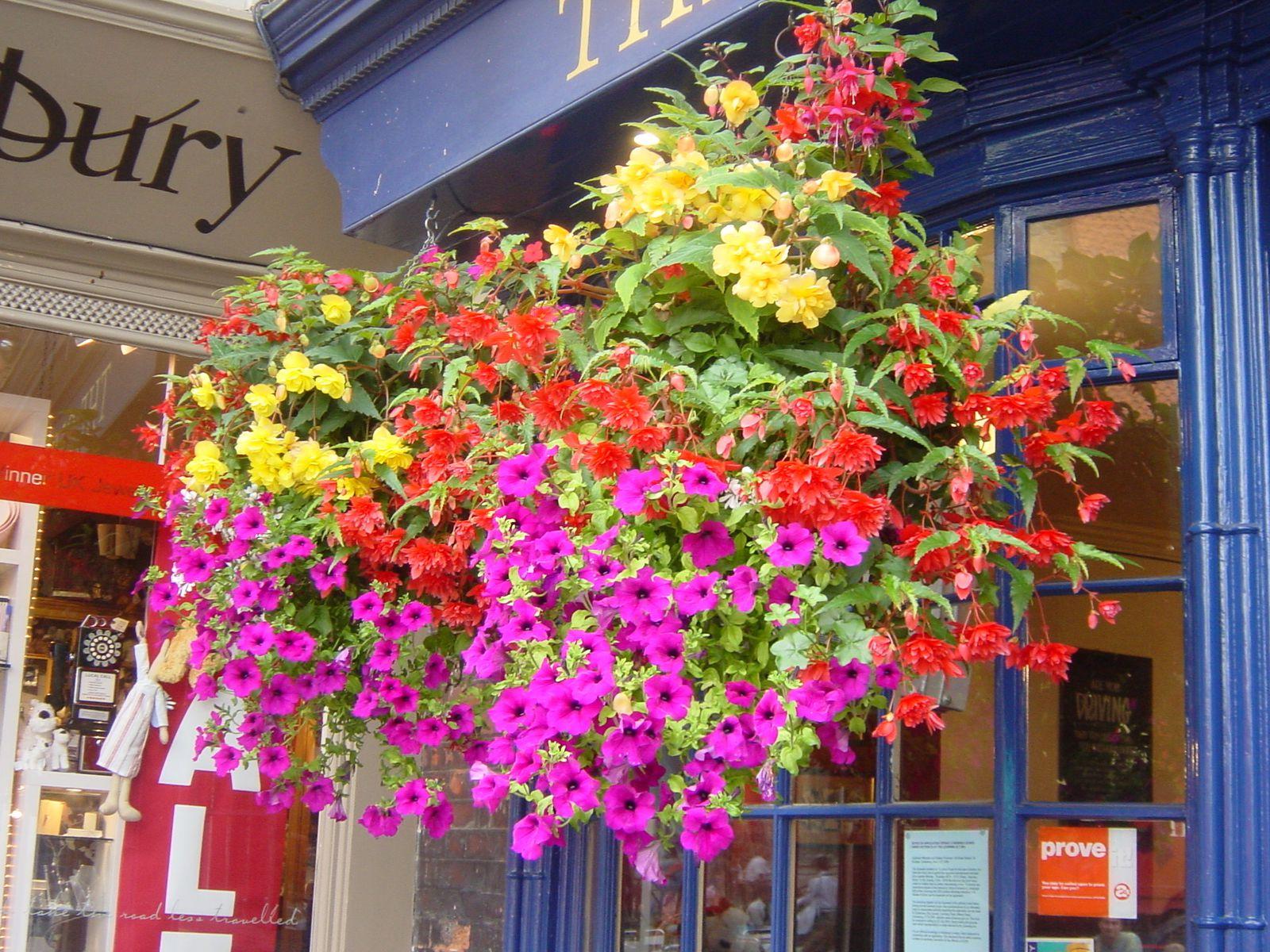 Les 3 photos du magasin ont été prises dans le Kent (GB).