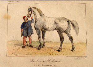 cheval-percheron.JPG