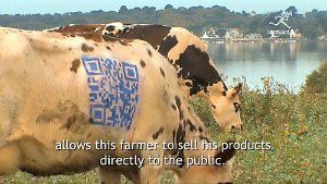 qr-code-vache-cow-.jpg