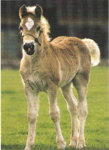 photo_haflinger.jpg