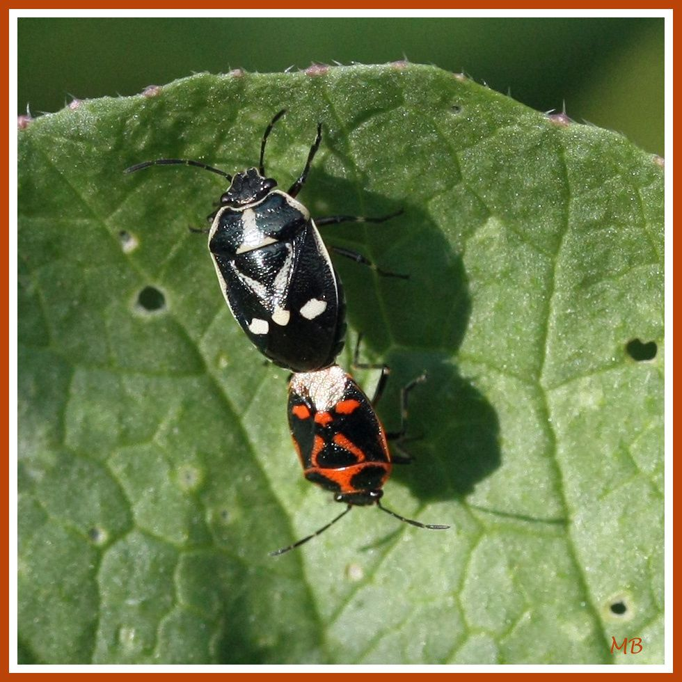 Insectes 0590