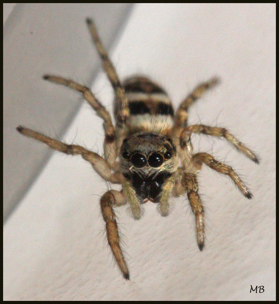 Arachnides-02-9452.jpg