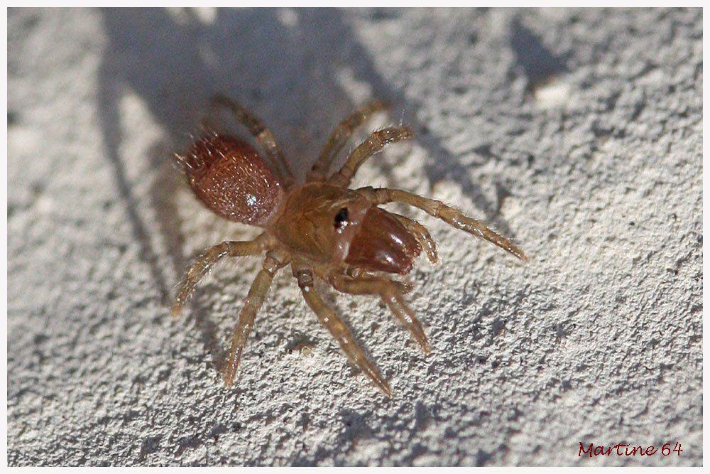 Album - Arachnides 04