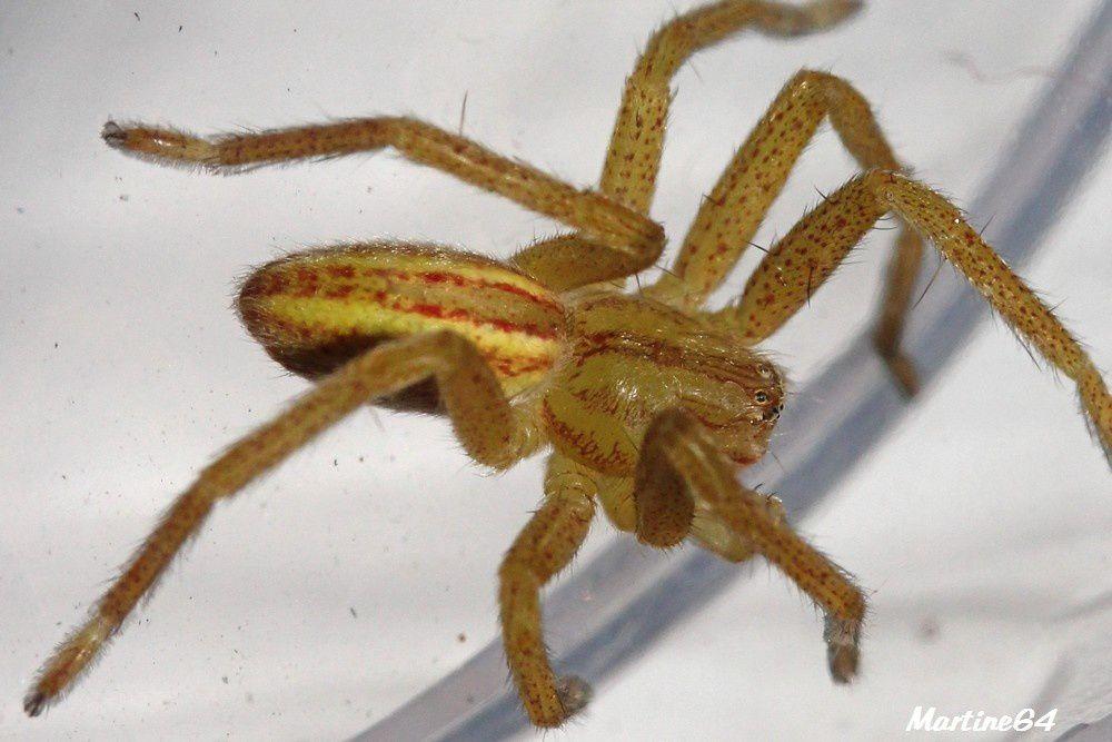 Album - Arachnides 05