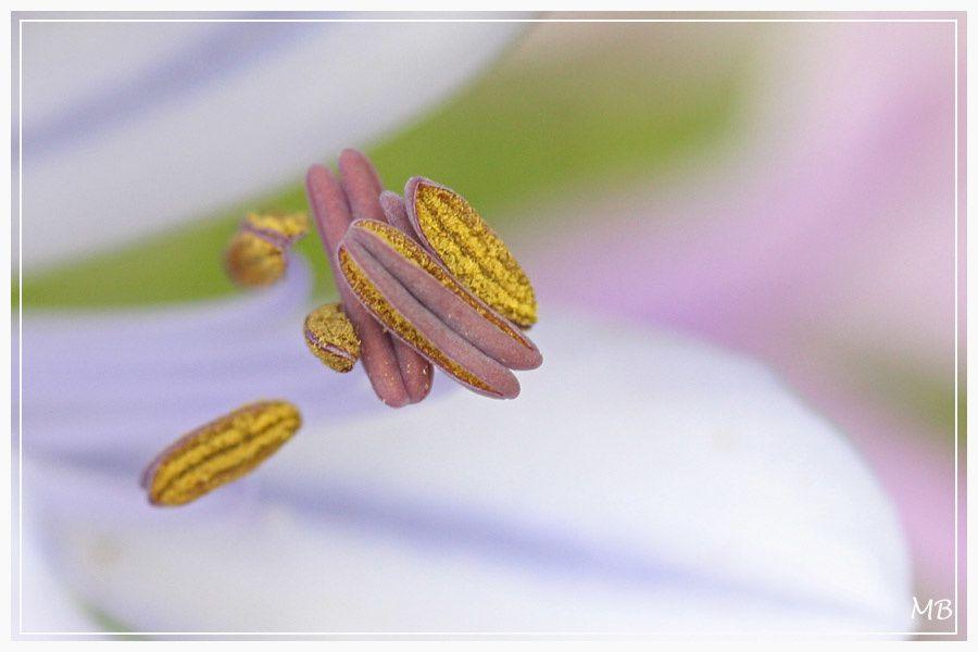 Les fleurs de mon jardin et d'ailleurs ...
