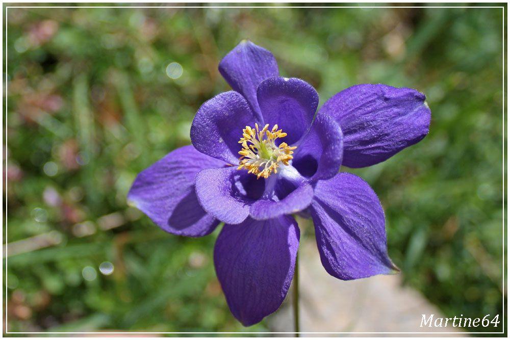 Quelques fleurs photographiées lors de balades dans les Pyrénées