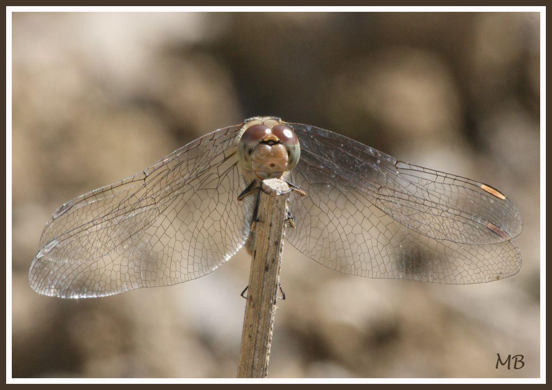 Les insectes dans la nature