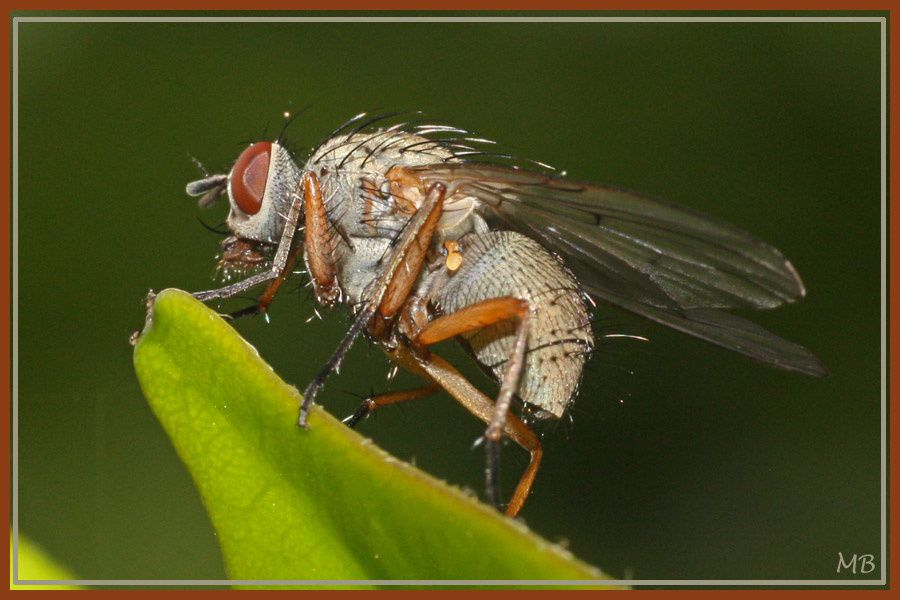 Insectes surpris dans le jardin