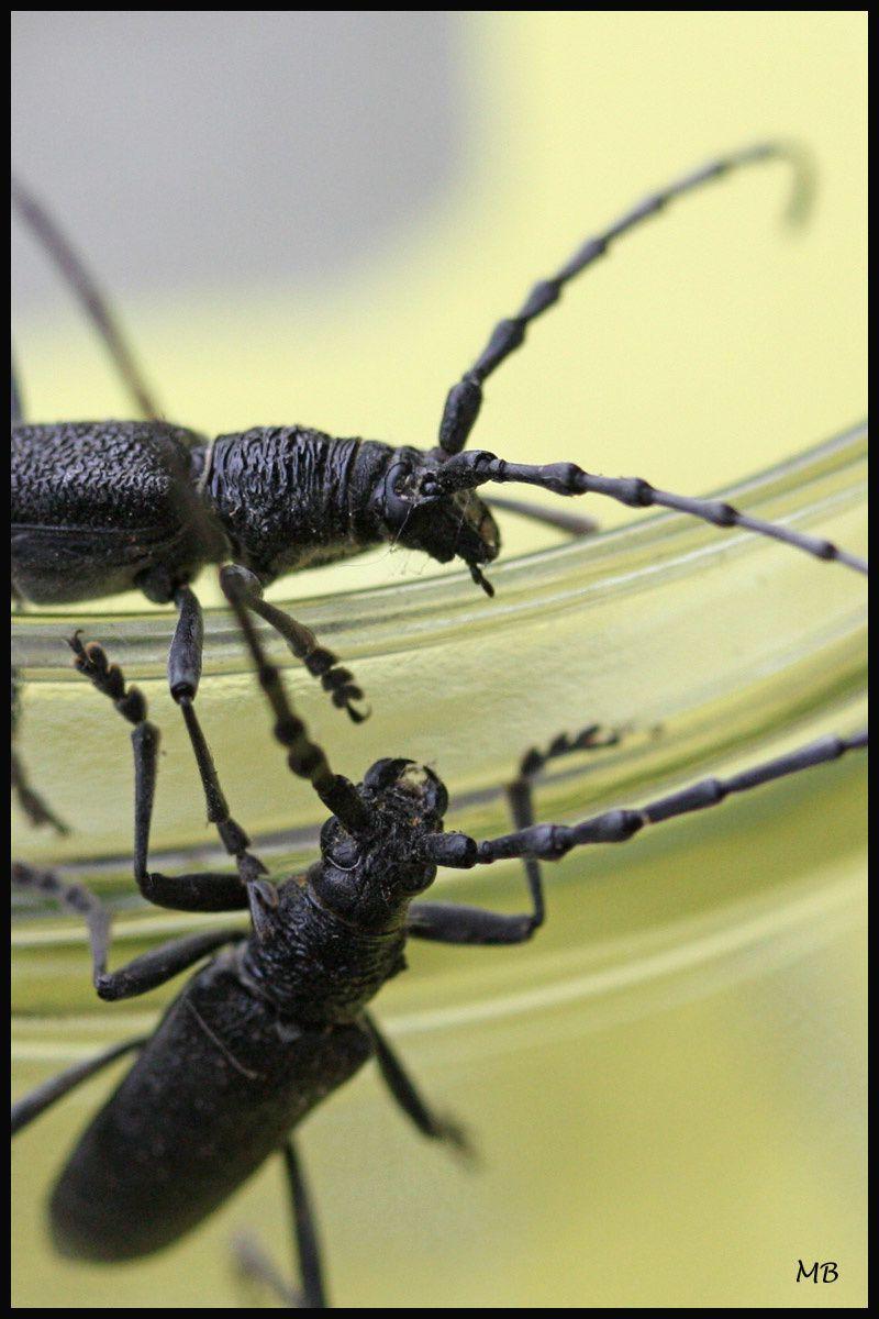 Insectes-03-2111.jpg