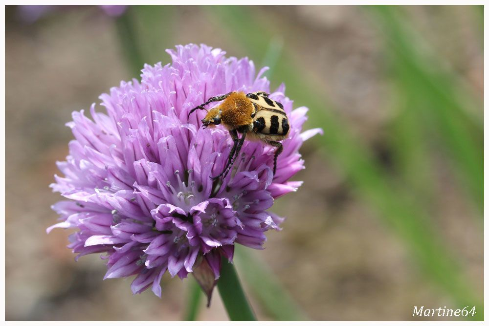 Insectes 04 5946