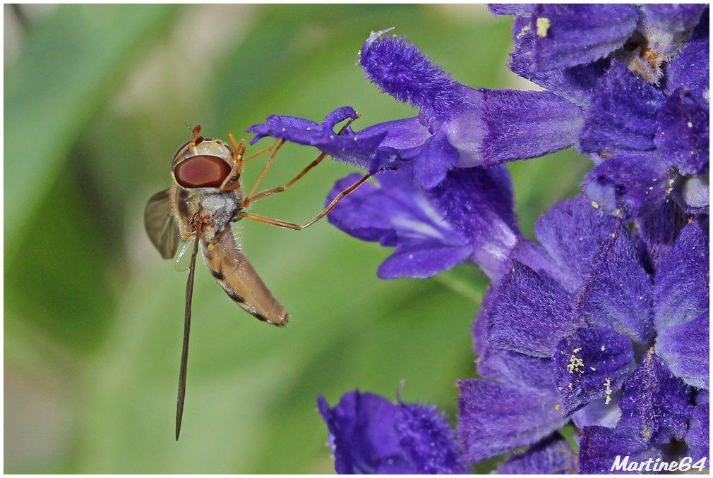 Album - Insectes 05