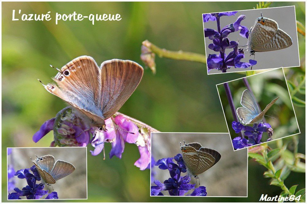 Montages Papillons 1387