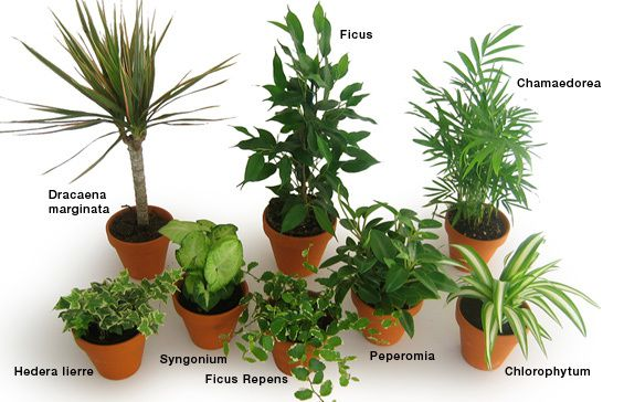 Les plantes int rieures d polluantes ou les placer clg for Plante interieur photo