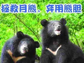 1 urgence animaux de chine ours