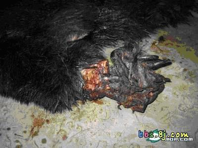12 urgence animaux de chine ours