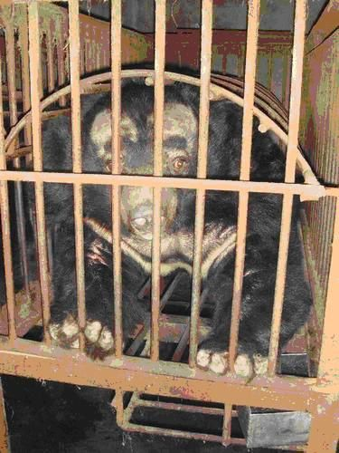 7 urgence animaux de chine ours