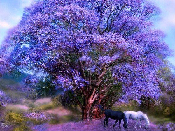 bel arbre violet et deux chevaux