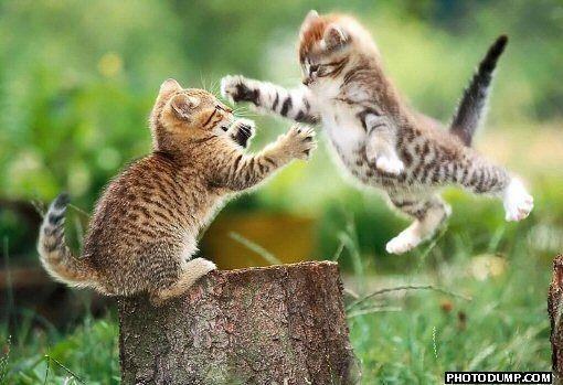 combattere.jpg
