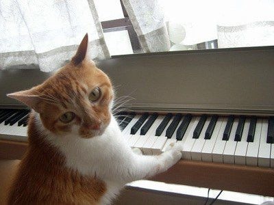 Hello-Japan---Cat-playing-piano.jpg
