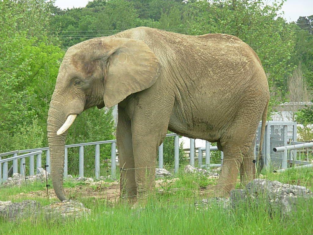 Sortie au zoo de Beauval lors du week-end de la Pentecôte (27 mai 2012)