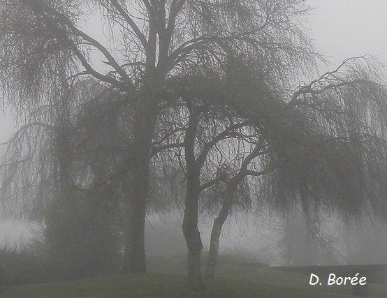 Bosquet brouillard