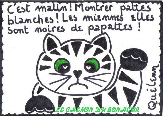 Monsieur-LE-CHAT-montre-patte-blanche.jpg