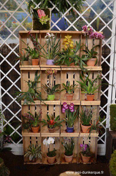 Orchidees---29-.JPG