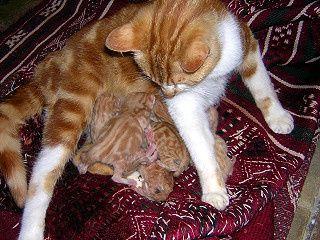 6_petits_chats_la_naissance