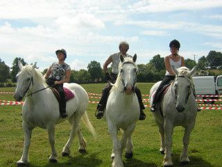 course_percherons