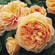 4282 crown princess margareta