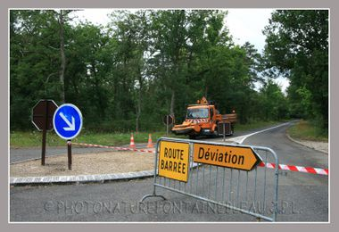 20080806_orage_fontainebleau_fore_2