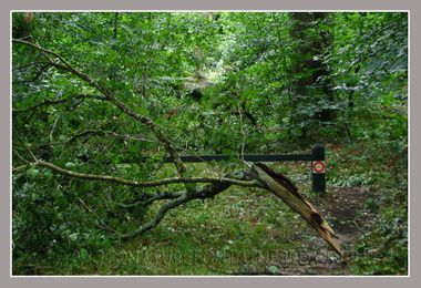 20080806_orage_fontainebleau_fore_4