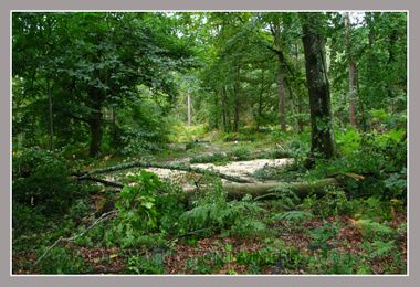 20080806_orage_fontainebleau_fore_5