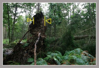 20080806_orage_fontainebleau_fore_7