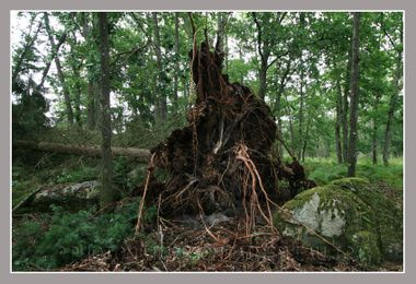 20080806_orage_fontainebleau_fore_8