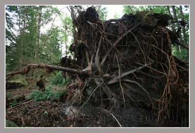 20080806_orage_fontainebleau_fore_9