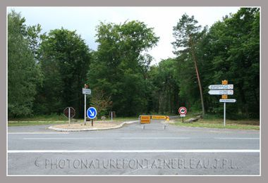 20080806_orage_fontainebleau_foret_