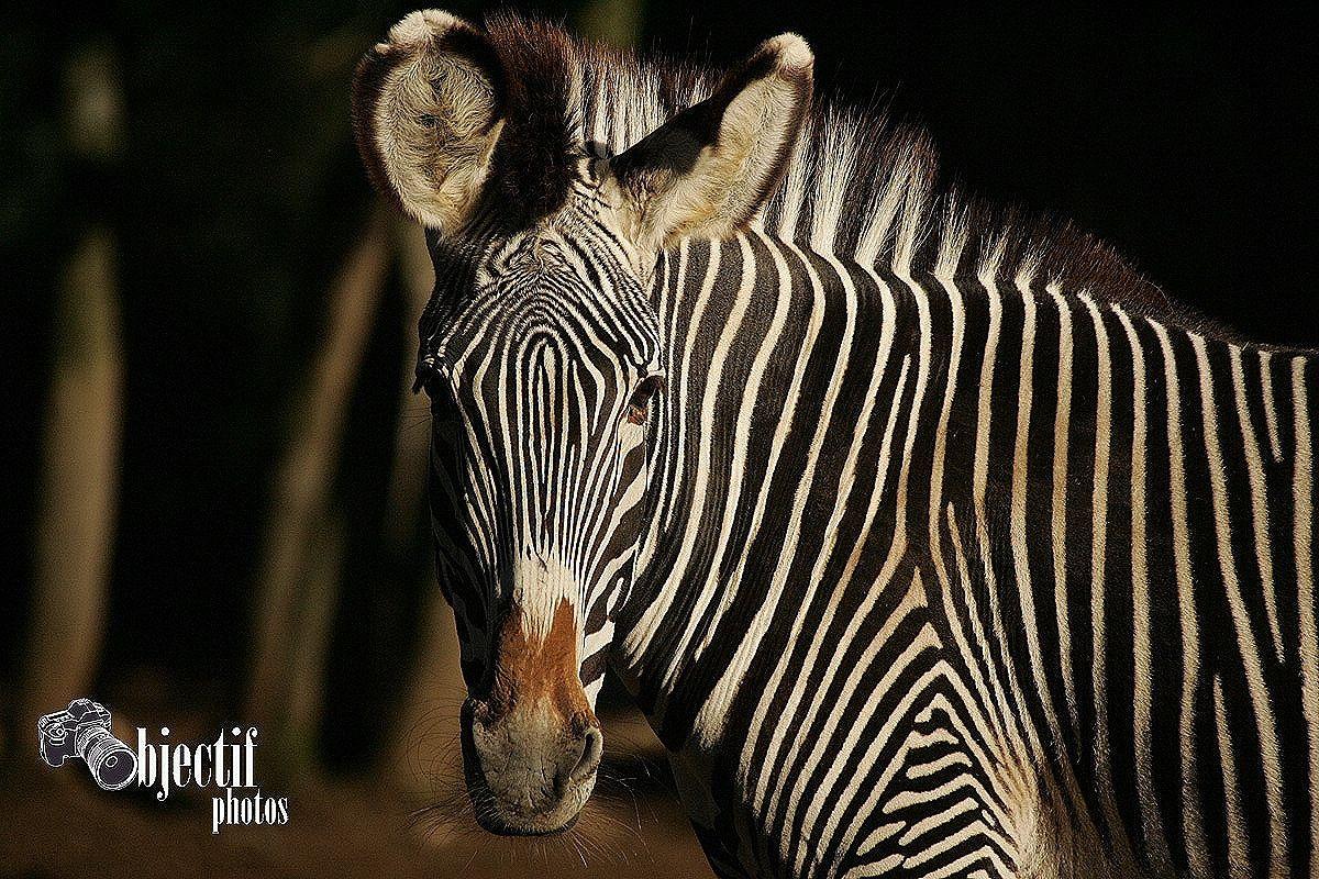 Album - Zoo-du-lunaret-Montpellier---1-partie-