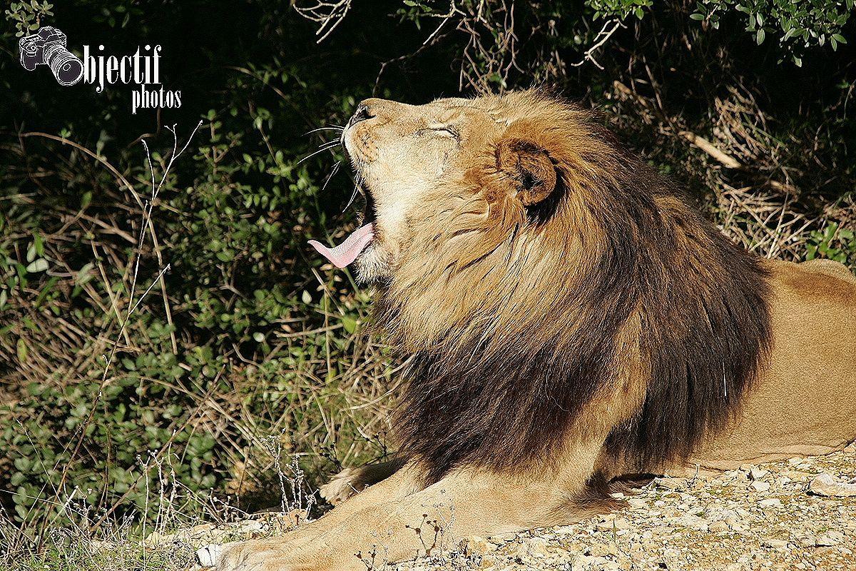 Album - Zoo-du-lunaret-Montpellier---2-partie-