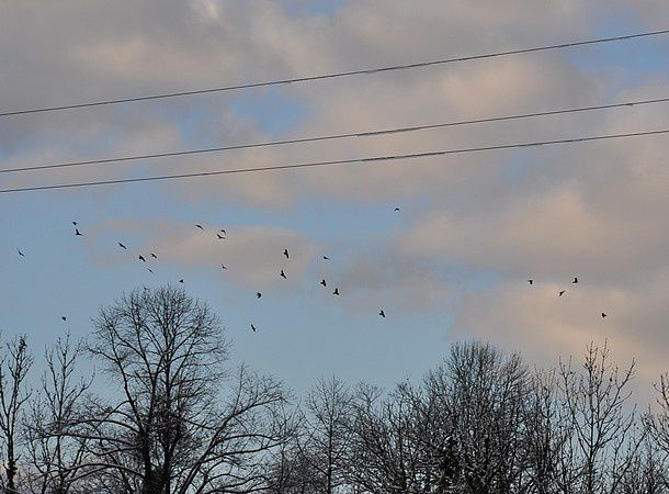 poesie-d-hiver-janvier-2015 0133