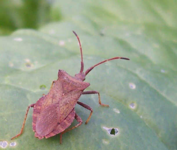 insecte (8)