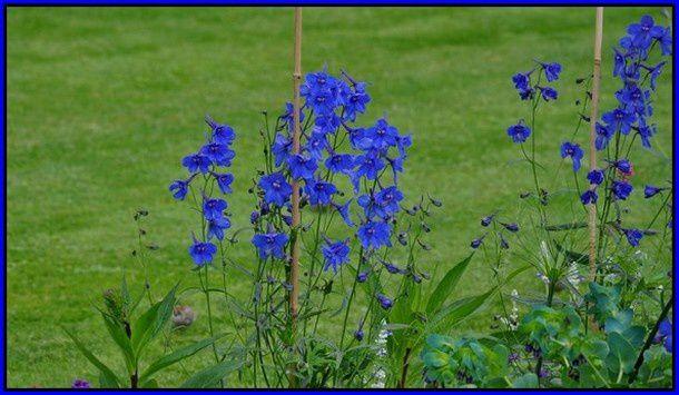 fleurs-bleues-0356-.-copie-1.JPG