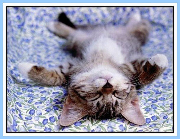 chat endormi001
