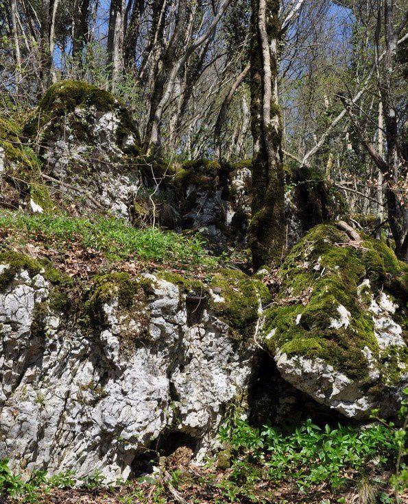 mousse-et-lichen 0029