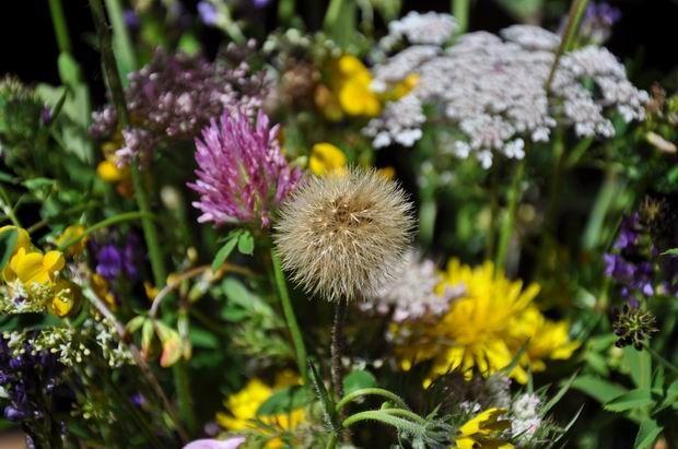 anniblog-michele-et-fleurs 0002